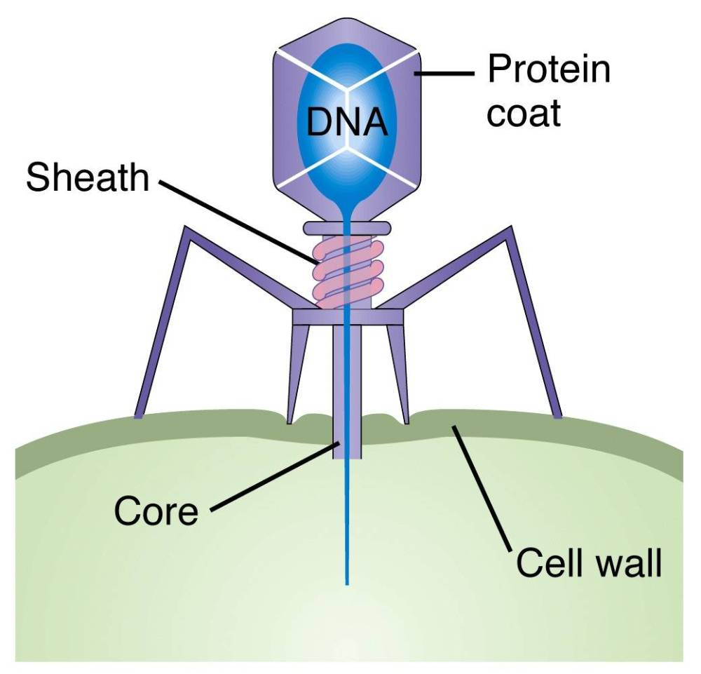 medium resolution of interview with ry young phages and phage therapy pros cons and history