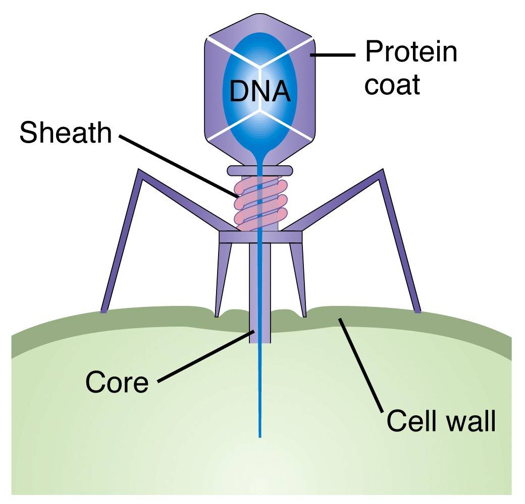 hight resolution of interview with ry young phages and phage therapy pros cons and history