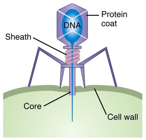 small resolution of interview with ry young phages and phage therapy pros cons and history