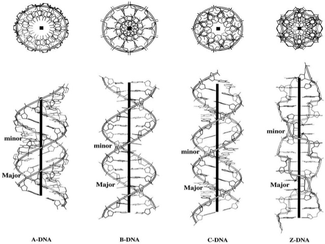 DNA- Structure, Properties, Types and Functions