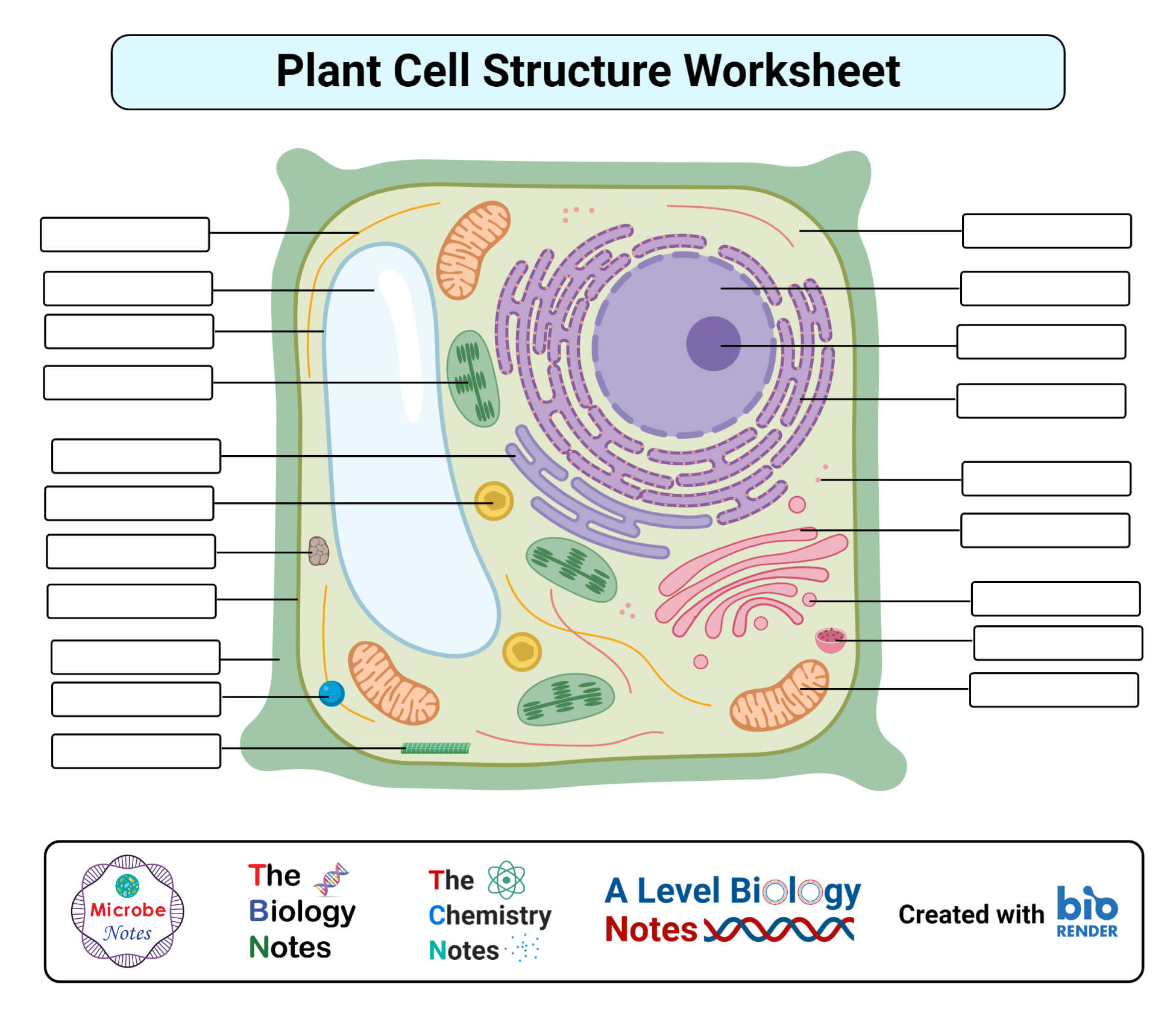 hight resolution of Plant cell- definition
