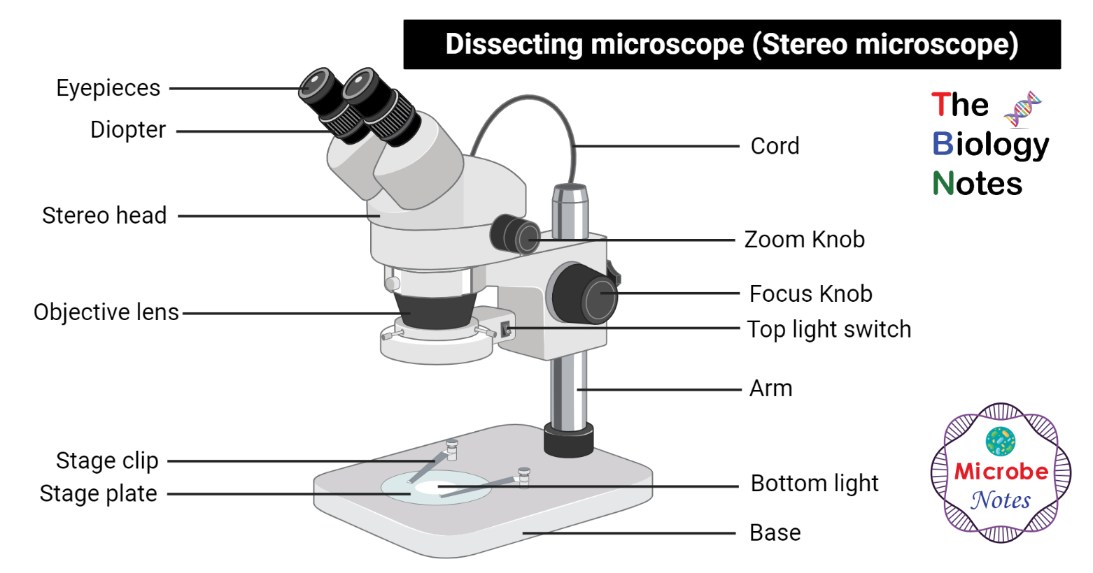 Dissecting Microscope Stereo Or Stereoscopic Microscope