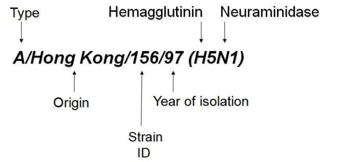 Naming of influenza virus