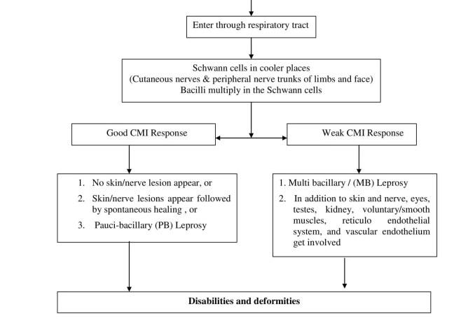 Pathogenesis of Leprosy