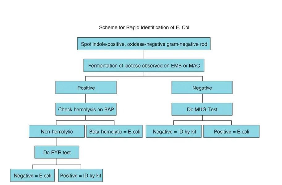 Human Parasitology Slideshare