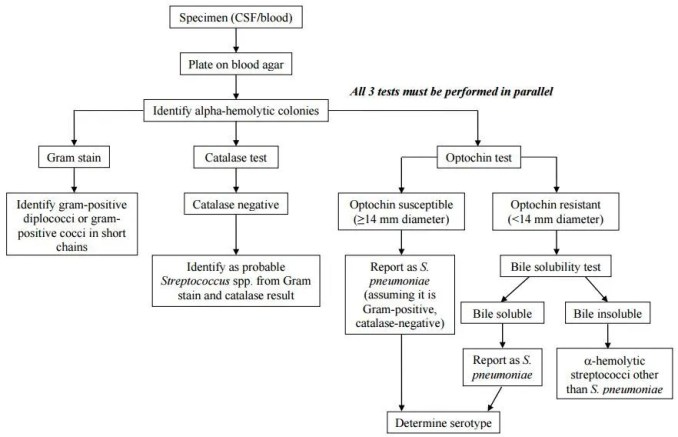 Flow chart for identification and characterization of a S. pneumoniae isolate