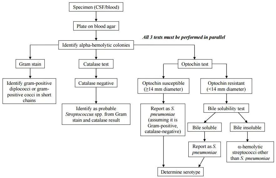 How To Identify Streptococcus Pneumoniae
