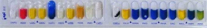 API 20 E Biochemical Test Strip