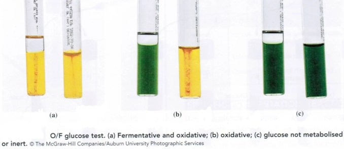 Oxidative Fermentative Test