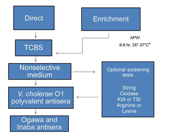 Procedure for recovery of Vibrio cholerae O1 from fecal sample