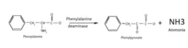 Phenylalanine Deaminase Test