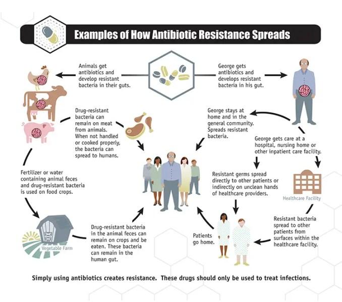 Spread of antibiotics resistance