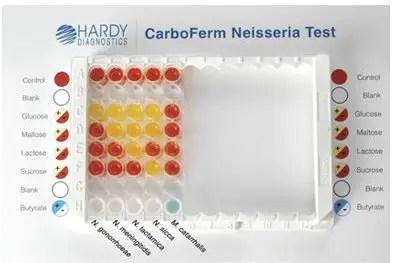 Neisseria and Moraxella in Carboferm neisseria test