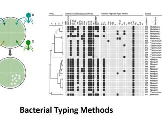 Bacterial Typing Methods