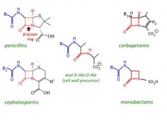 Molecular structure of common beta-lactam antibiotics