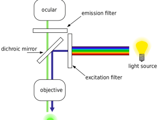 Working mechanism of fluorescence microscope
