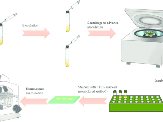 Shell Vial Cell Culture