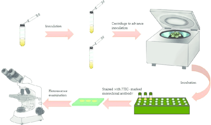 Shell Vial Cell Culture Technique
