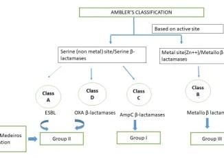 Ambler classification of beta-lactamases