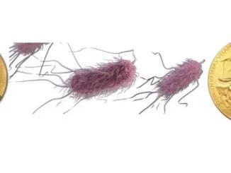 E coli won number of nobel prizes