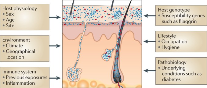 Factors affecting variation in the skin microbiome