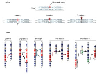 Mutation and types