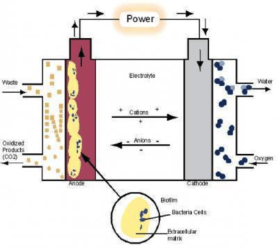 potato cell diagram wiring diagrams house lights the role of geobacter spp. in bioremediation and microbial fuel cells - microbewiki