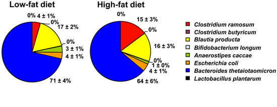 Metabolic disorders associated with the human gut