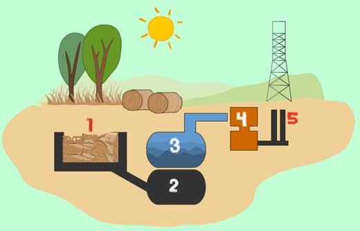 5 Biomass energy