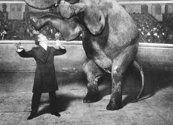 Houdini and Jennie, the Vanishing Elephant, January 7, 1918