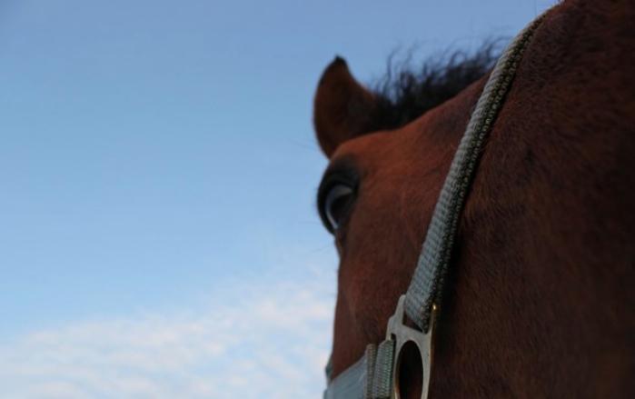 Farvel baby-hest!