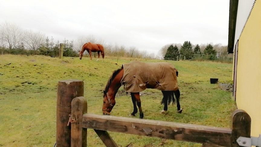 Så kom hestene hjem