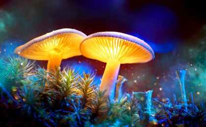Denver's Psilocybin Mushroom Policy Review Panel Set to Launch in January