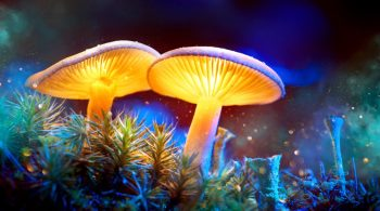 Microdosing Psychedelics: Motivations, Subjective Effects and Harm Reduction