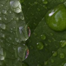 IMG_6578-dew-on-leaf-756