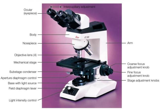 Microscope Anatomy