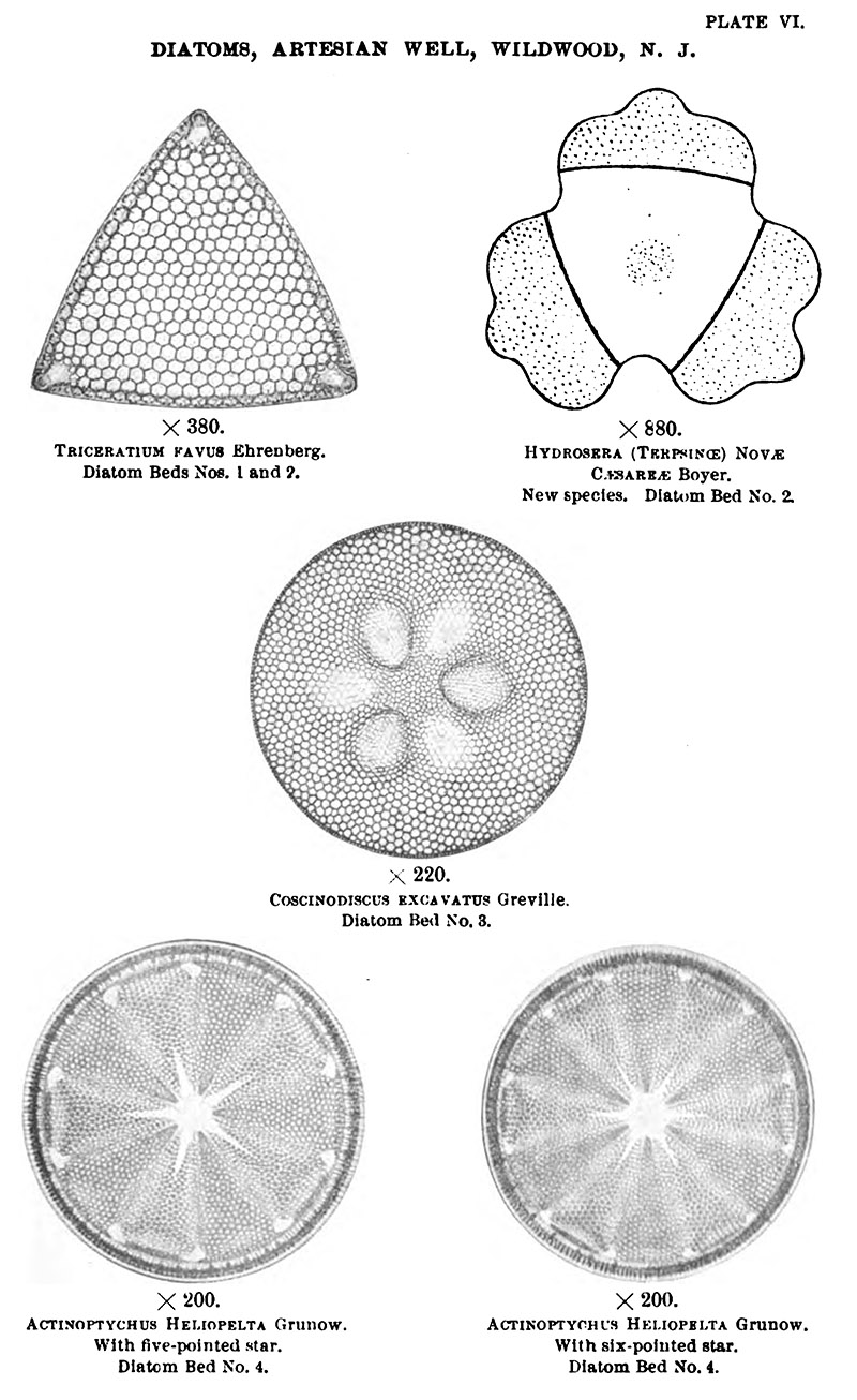 hight resolution of photographs and drawings of diatoms from woolman s 1894 artesian wells in southern new jersey and at crisfield maryland from the annual report of the