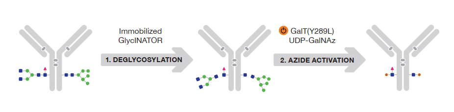 Seminar on how to directly label your primary antibodies: Skip the secondary, part 3!