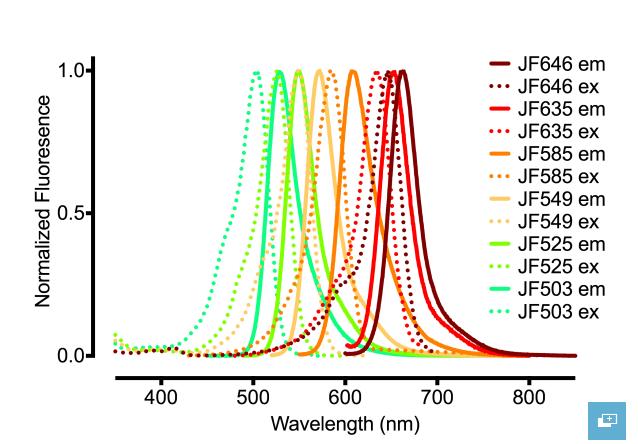 Brighter secondary antibodies