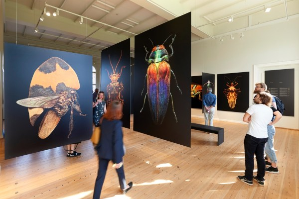 Microsculpture - Insect Portraits Of Levon Biss