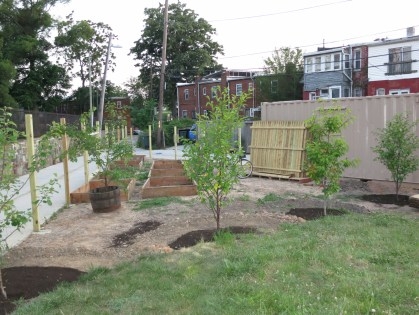 Brian puts in first fruit trees
