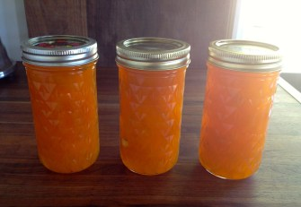 Apricot jam from the apricot tree...