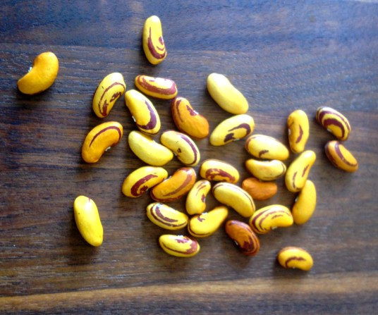 Tiger beans (from dry bean trial)