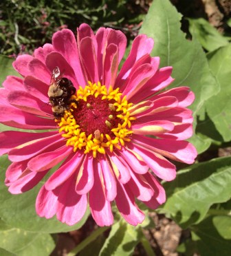 Zinnia bee bedroom