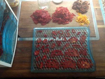 Tomato drying
