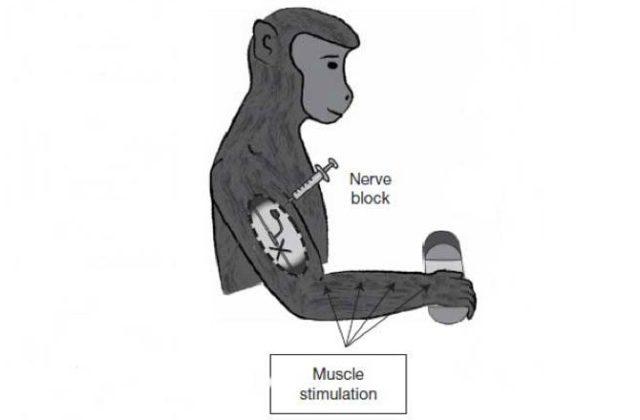 mind-control-paralyzed-limbs-670