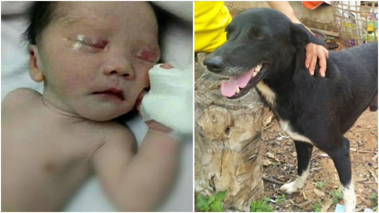 Hero dog saves life of newborn after teen mom buries boy alive in Thailand.