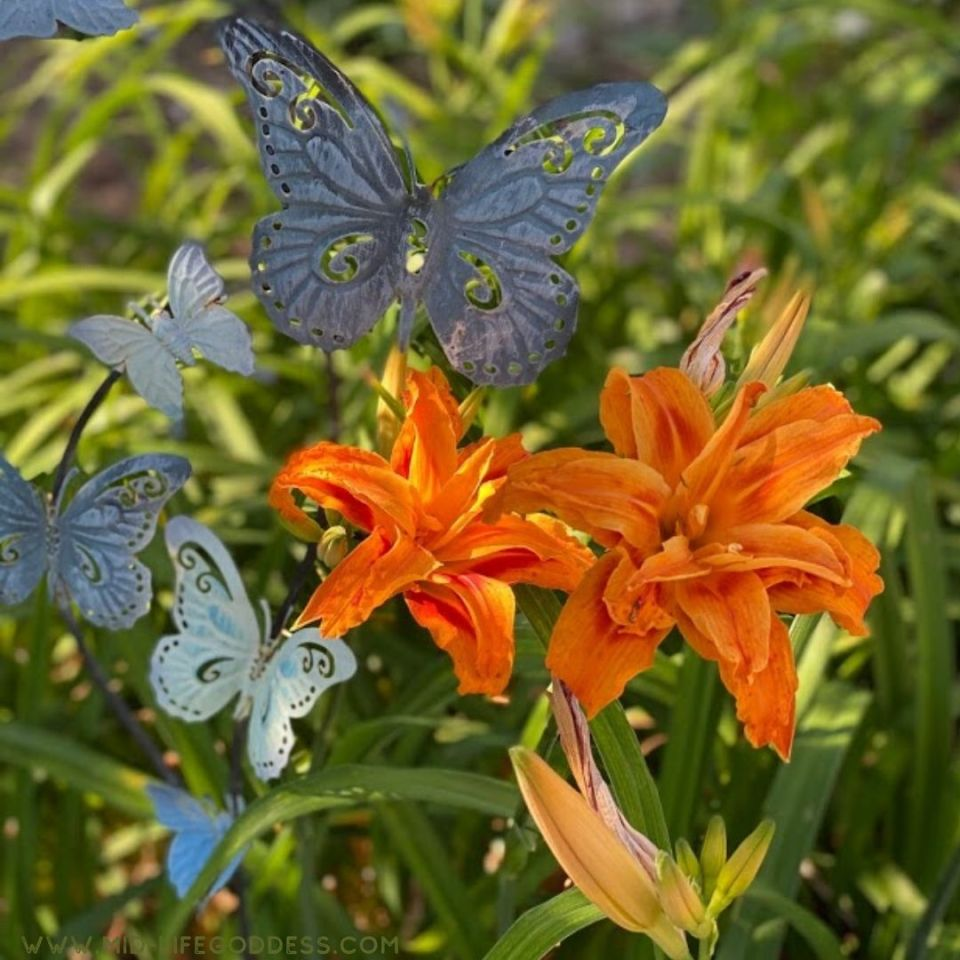 Tiger Day Lily
