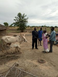 Pastor David Alier's wife receives cow and calf from District