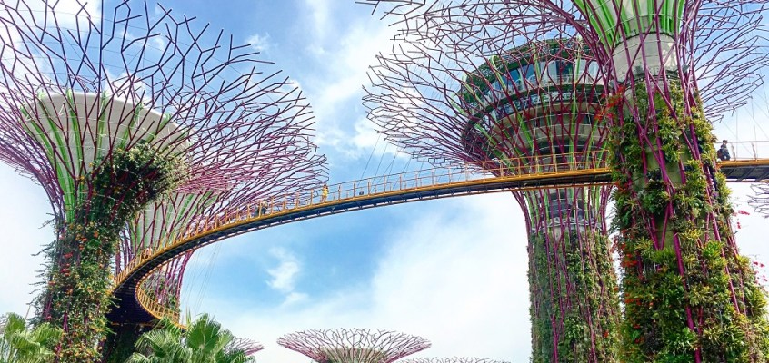 Singapore Sling: A Walk Through the Supertrees